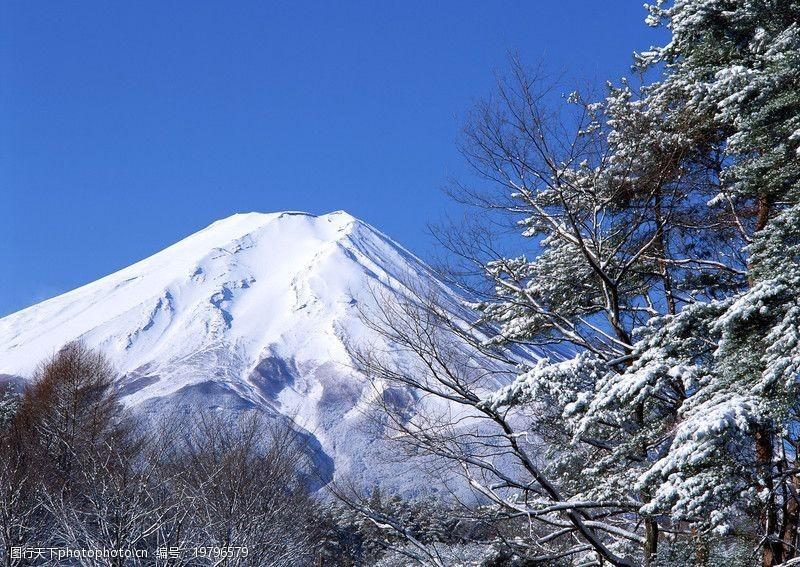 富士山樱花_樱花与富士山0193图片-图行天下素材网